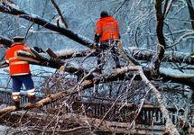 Уборка упавшего дерева с путей метро. Фото: @MetroOperativno