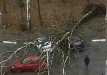 Поваленное дерево в Москве. Фото из инстаграма @irina_hcramcova
