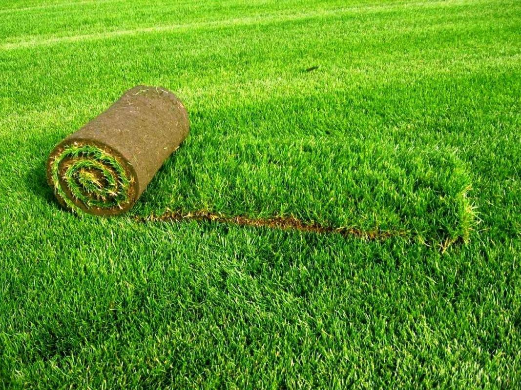 Рулонные газоны по самым выгодным ценам