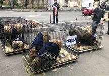 К редакции «Новой газеты» принесли клетки с овцами
