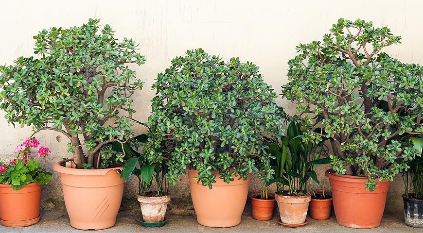 Красивые комнатные растения по приятным ценам